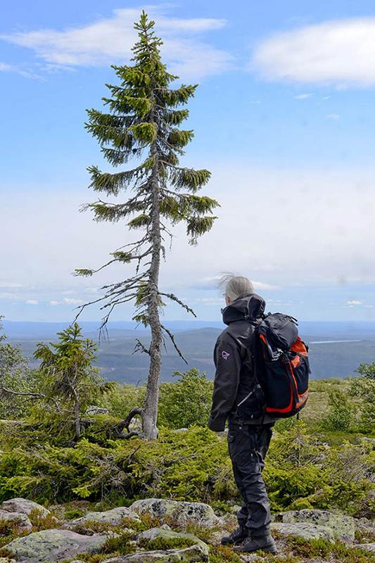 Dünyanın en yaşlı ağacı hangisidir ?