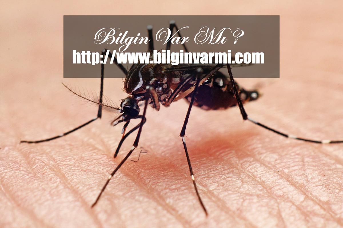 En ölümcül hayvan sivrisinek