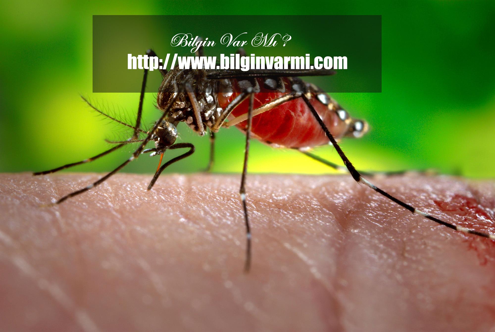 Sivrisinek ölümleri
