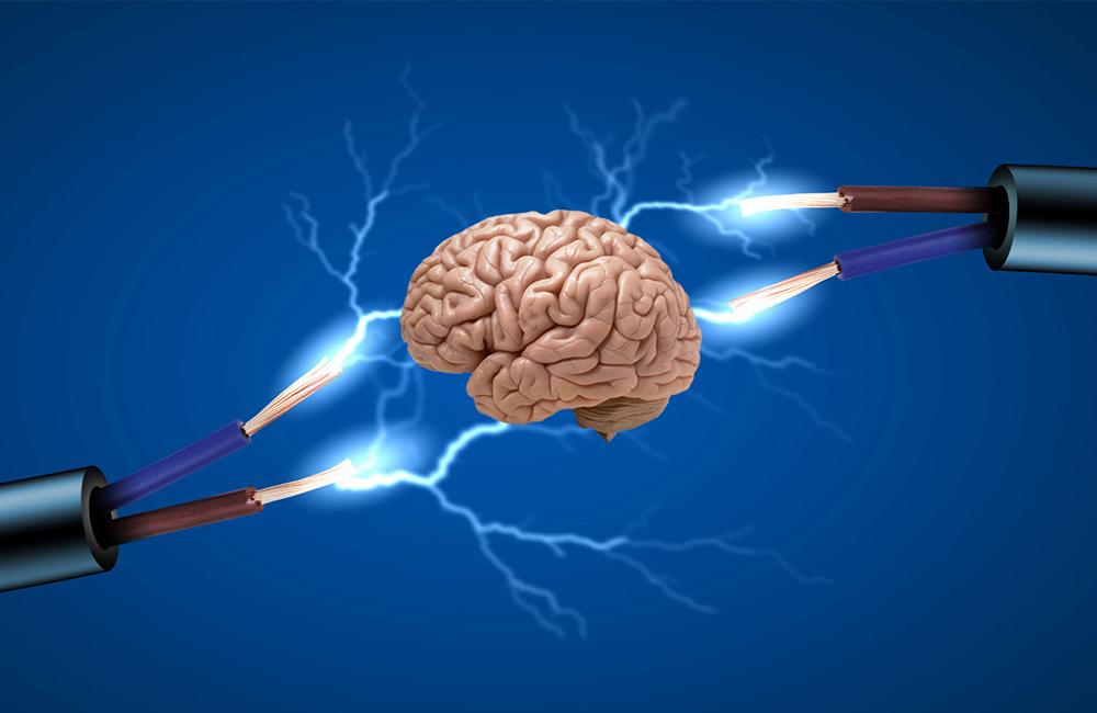Beyin Loplarının Öğrenmedeki Fonsiyonu