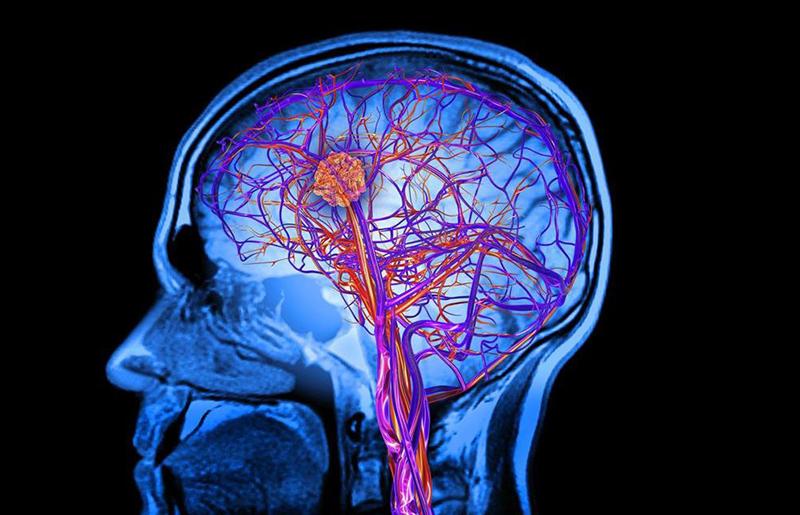 Beynimiz Nasıl Öğrenir ? Beyin Nedir ?