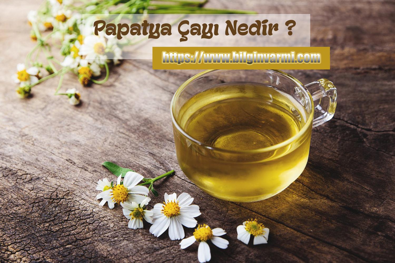 Papatya Çayı Nedir ?