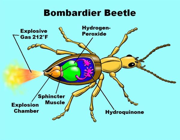 Topçu Böcekleri ve Özellikleri