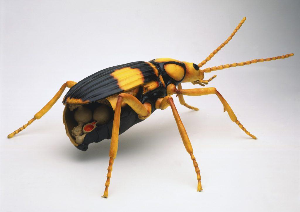 Bombardıman Böcekleri