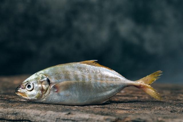 Neden Balık Tüketmeliyiz ? Balığın Faydaları