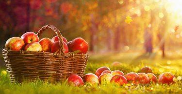Elmanın Faydaları Nelerdir ?