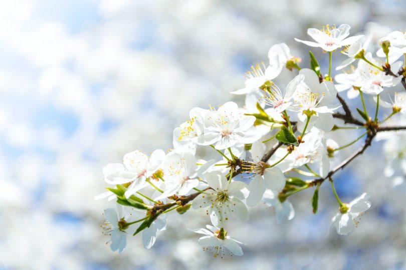 Nevruz Bayramı Nedir ? Ne Zaman Kutlanır ?