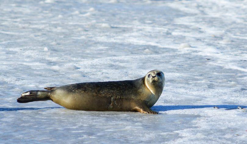 Hayvanlar Kutuplarda Nasıl Yaşar ?