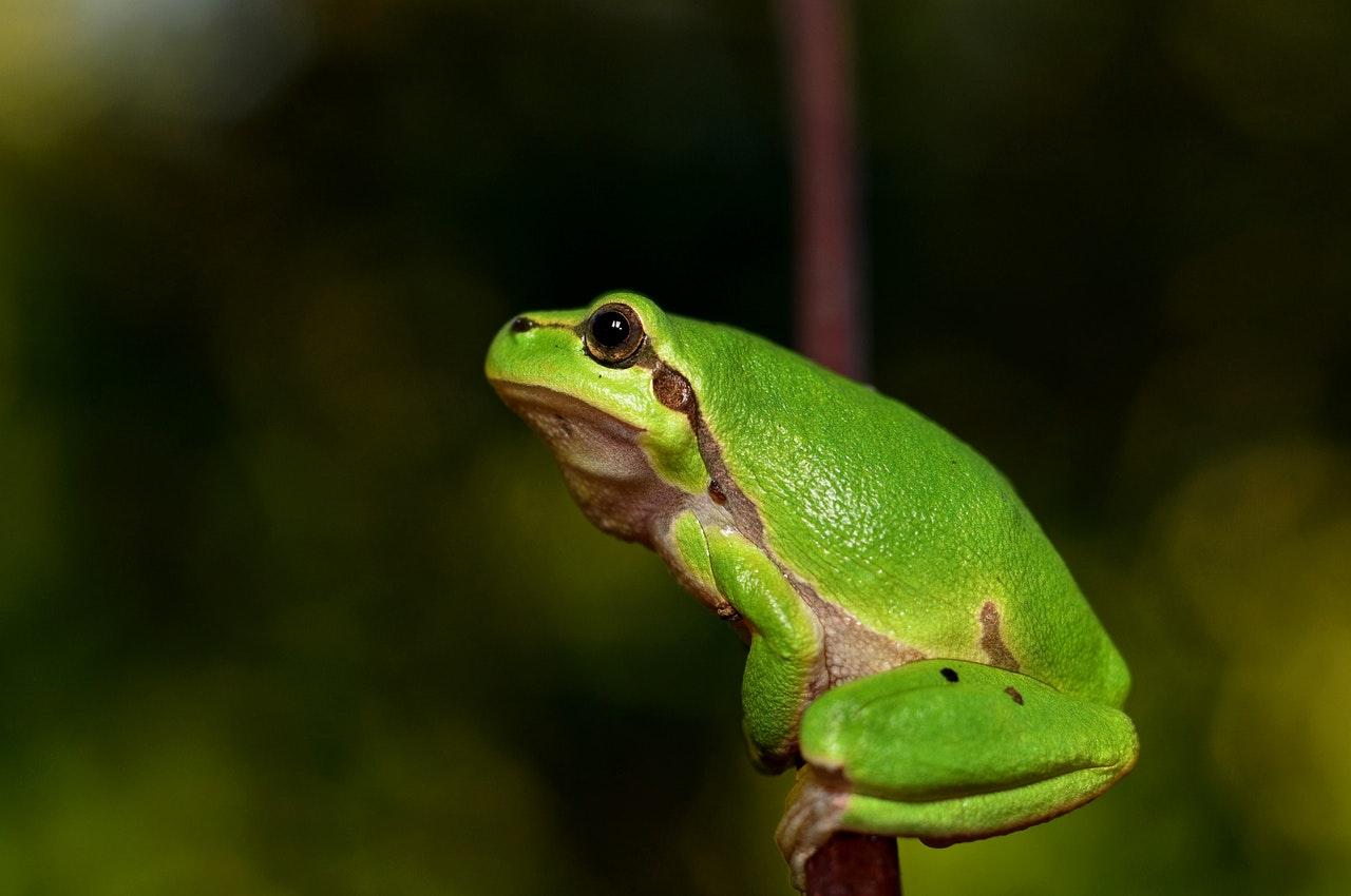 Hayvanlar Neden Kış Uykusuna Yatar ?