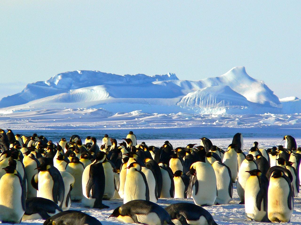 Hayvanlar Kutuplarda Nasıl Yaşarlar ?